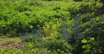 (Προς Πώληση) Αξιοποιήσιμη Γη Οικόπεδο || Αθήνα Κέντρο/Ηλιούπολη - 1.567 τ.μ, 1.800.000€