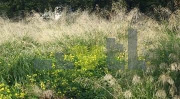 (Προς Πώληση) Αξιοποιήσιμη Γη Οικόπεδο || Ανατολική Αττική/Βούλα - 473 τ.μ, 500.000€